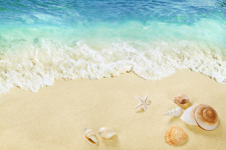 Shells on the beach. Splashing waves on the seashore. Tropical sea.