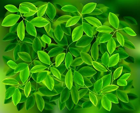 Fresh leaves. Green garden. Plant background. Vector illustration.
