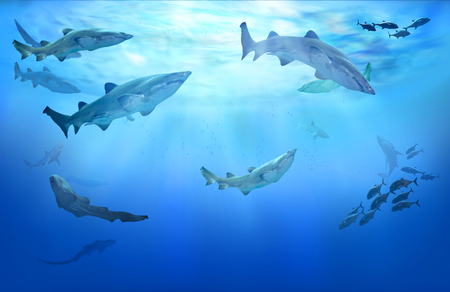 Life in tropical waters. Hunting sharks. Shoal of fish. Stockfoto