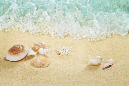 Shells on the beach. Tropical sea. Splashing waves on the seashore.