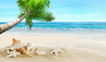 Shells on the beach. Tropical sea. Coconut palm. Zdjęcie Seryjne