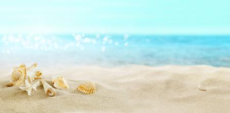 Vista della spiaggia sabbiosa. Conchiglie nella sabbia.