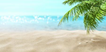 Coconut palm on the beach. Tropical sea. Zdjęcie Seryjne