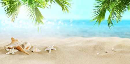 Seashells in the sand. Coconut palms on a tropical beach.