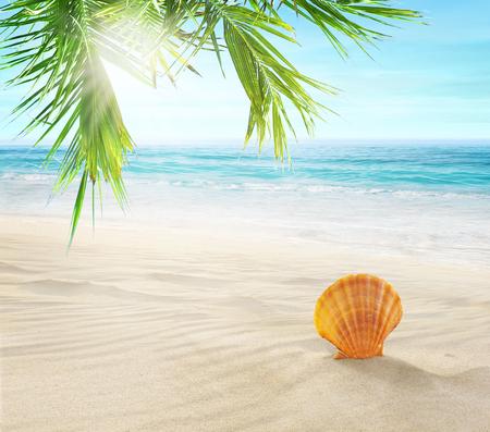 Seashell in the sand. Coconut palms on a tropical beach.