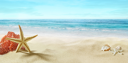 Blick auf den Sandstrand. Korallen und Seesterne im Sand. Sommer, sonniger Tag.