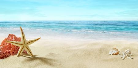 Vue sur la plage de sable. Corail et étoiles de mer dans le sable. Été, journée ensoleillée.