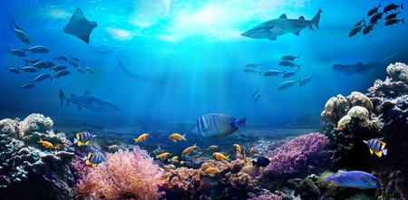 Underwater view of the coral reef. Life in the ocean. School of fish. Zdjęcie Seryjne