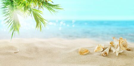Seashells in the sand. Coconut palms on a tropical beach. A great place for a holiday.