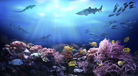 Underwater view of the coral reef. Life in tropical waters.