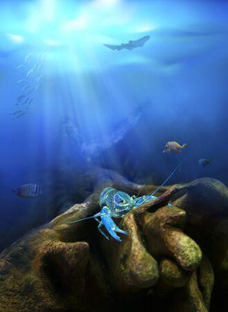 Underwater view. Crayfish in nature habitat. Zdjęcie Seryjne - 131426003