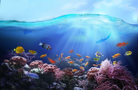 Rich colors of the coral reef. Underwater sea world. Colorful tropical fish. Ecosystem. Zdjęcie Seryjne - 133014972