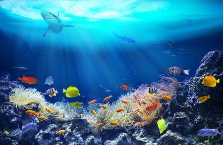 Leben in einem Korallenriff. Unterwasser Meereswelt. Bunte tropische Fische. Ökosystem.