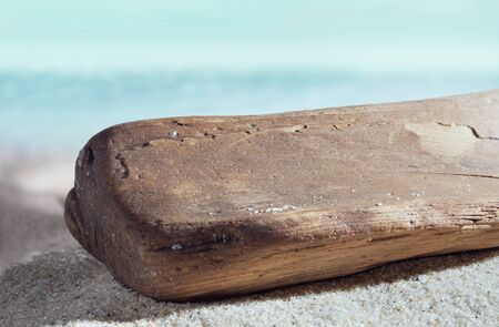 A piece of old wood washed up on the sea shore. Summer on a tropical beach. Macro photo.
