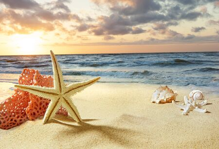 Starfish and shells on the beach. Sunrise over the sea. Waves on the seashore.