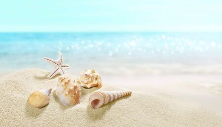 View of the sandy beach. Summer day. Shells in the sand. Фото со стока