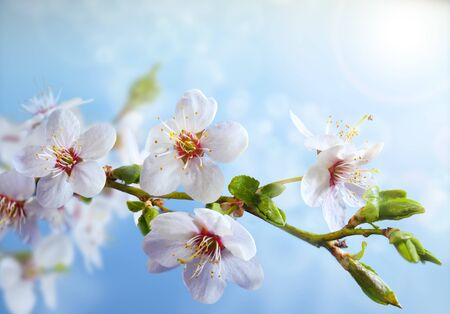 Beautiful blooming branch of the tree. Strong morning sun. Closeup of a flowers. Spring in the garden. Nature background.