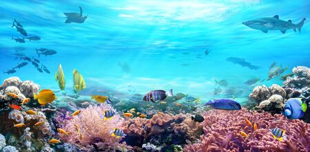 Animals of the underwater sea world. Life in a coral reef. Colorful tropical fish. Hunting shark. Ecosystem. Фото со стока