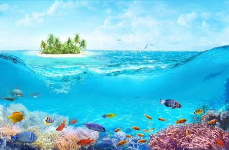Animals of the underwater sea world. A beach on a tropical island. Colorful tropical fish. Life in the coral reef. Фото со стока