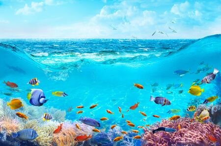 Colorful tropical fish in coastal waters. Animals of the underwater sea world. Life in a coral reef. Ecosystem. Фото со стока