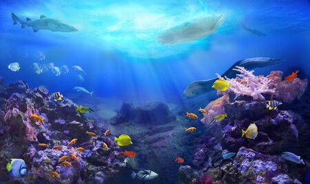 A small boat floating over a coral reef. Underwater sea world. Life in the ocean. Colorful tropical fish. Coral reef ecosystem. Фото со стока