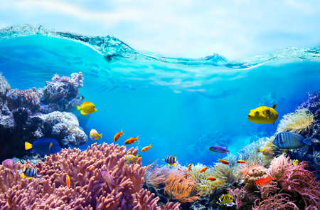 Colorful tropical fish in coastal waters. Life in a coral reef. Animals of the underwater sea world. Ecosystem.
