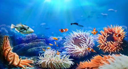 Animals of the underwater sea world. Sunflower starfish and sea anemones. Life in a coral reef. Фото со стока