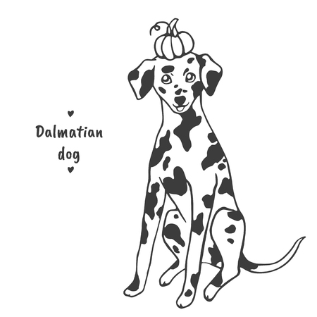 Dalmatian dog sitting and holding a pumpkin on his head Illustration