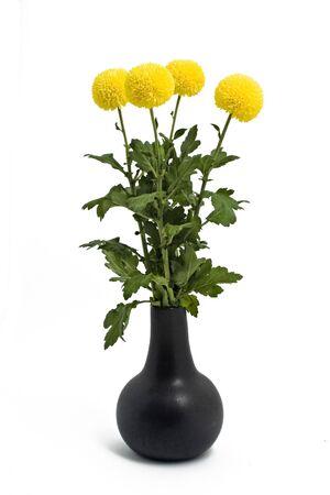 4 chrysanthemum photo