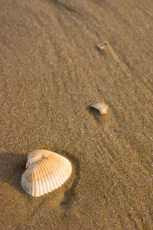 Shell auf dem Sand in der Nähe des Ozeans