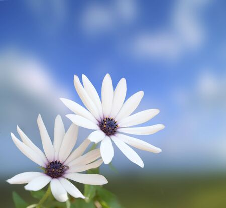 two white flowers on a blue sky in background