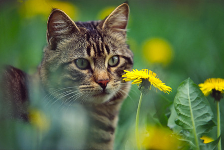 sneak: cat in the grass