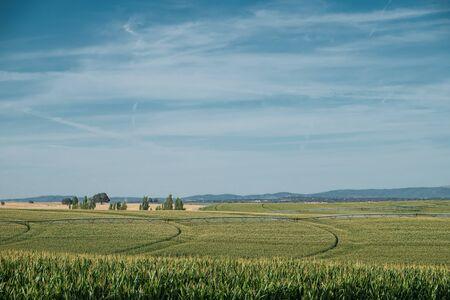 portugal agriculture: Corn Field
