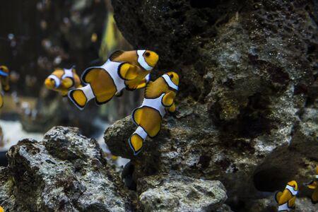 aquarian: Colorful fish in the aquarium