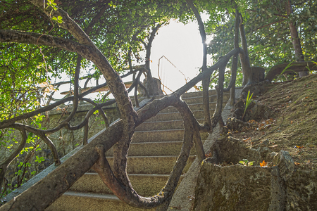 Medieval stairs with vegetation