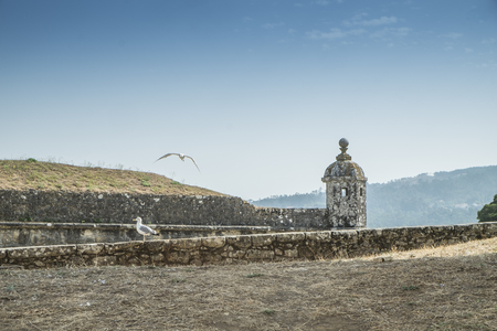 Seagull flying with castle wall