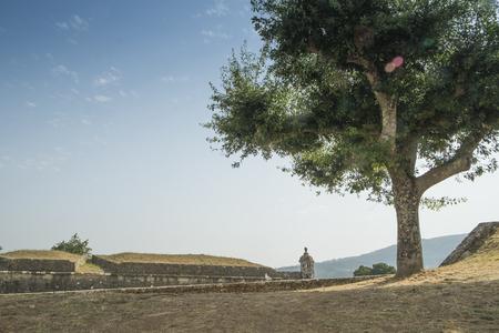 peloponissos: Tree on a castle wall