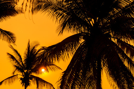 silhouette of palm trees with sunset.