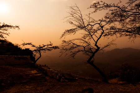 Dried trees with mountain views. Sunset.