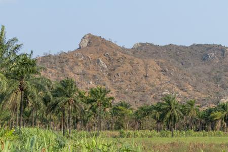 African farm field. Angola