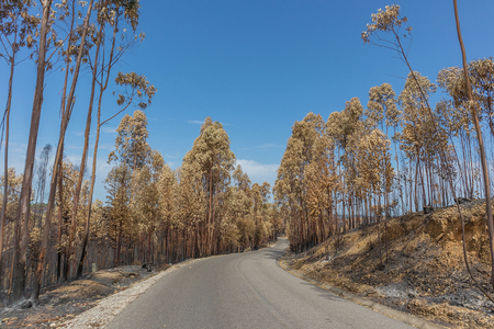 National road with burnt forest. Portugal 版權商用圖片