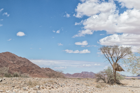 Tree with birds nest with mountains of Namibia desert in background.