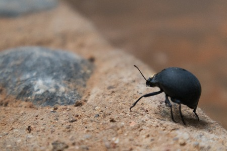 Close up of beetle with blurred background.
