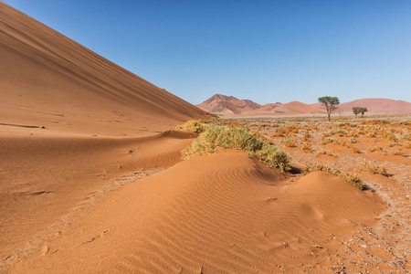 landscape with shrubs and red dunes in the Namibia desert. Sossusvlei.