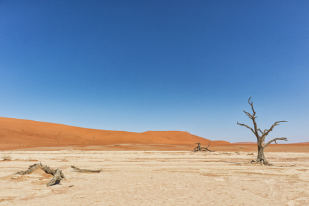 Landscape of death vlei, dead and dry trees with red dunes in Sossusvlei. Namibia.