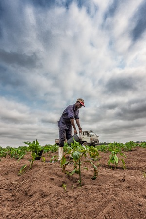 CABINDA/ANGOLA - 09 JUN 2010 - African farmer watering planting, Cabinda. Angola. Stok Fotoğraf - 99411204