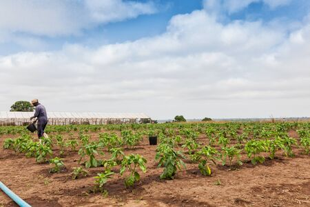 African farmer to watering plantation. Archivio Fotografico