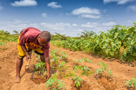 CABINDA / ANGOLA - 09 JUIN 2010 - Agriculteur rural pour labourer des terres à Cabinda. Angola, Afrique.