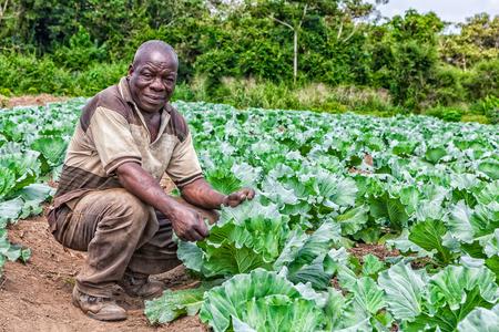 CABINDA / ANGOLA - 09 CZERWCA 2010 - Portret afrykańskiego rolnika wiejskiego na plantacji. Publikacyjne