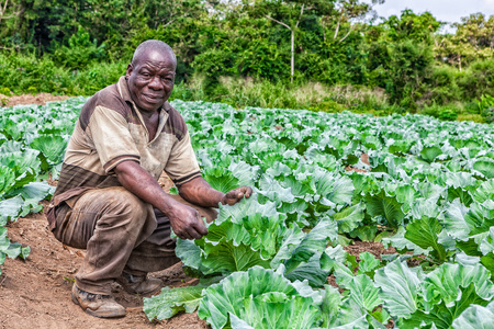 CABINDA / ANGOLA - 09 JUN 2010 - Portret van Afrikaanse landelijke landbouwer in plantage. Redactioneel